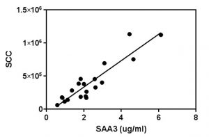 Correlation of SAA3 (milk serum amyloid A) with somatic cell counts